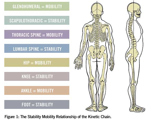 Mobility and Stability Chart